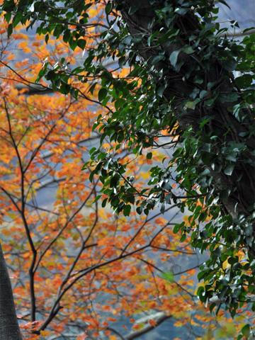 秋の根知4