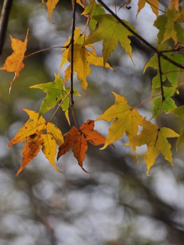 秋の根知5
