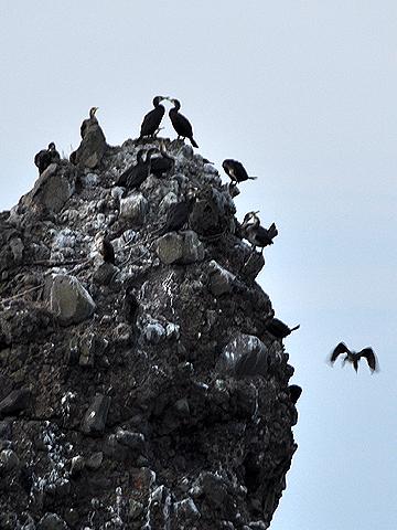 海鳥のたまり場