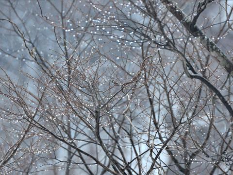 木々と雫2