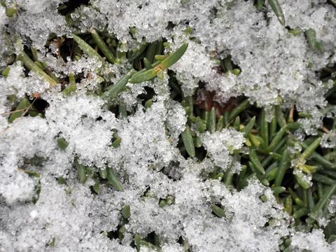 氷の様な雪