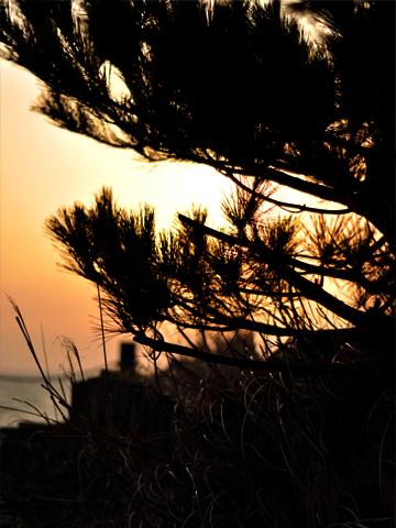 夕焼け空と松