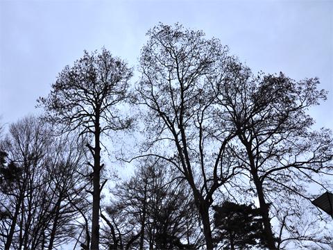 木々を見上げる