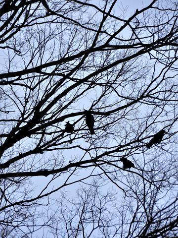 カラスのとまる木々