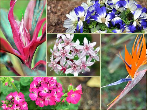 植物園の花々