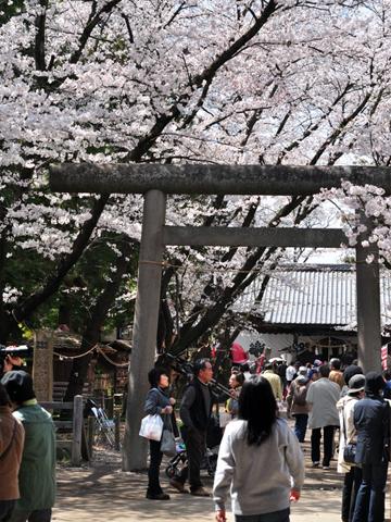 上田城の中の鳥居