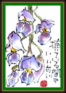 奴奈川絵手紙の会さんの絵手紙2-8