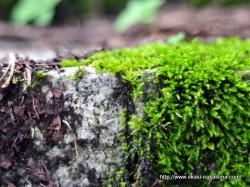 苔むす石段