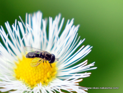 花粉とたわむれる
