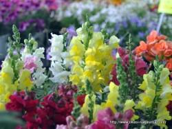 花いっぱいフェアの花