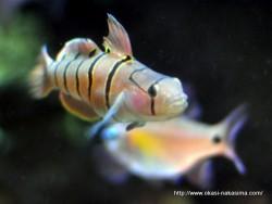 マリンピア日本海の魚1
