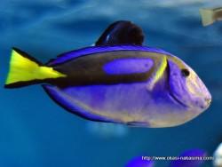 マリンピア日本海の魚10