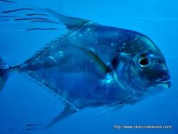 マリンピア日本海の魚11