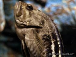 マリンピア日本海の魚5