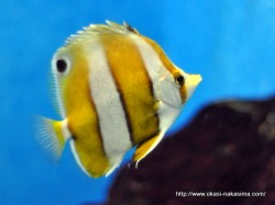 マリンピア日本海の魚6