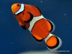 マリンピア日本海の魚9