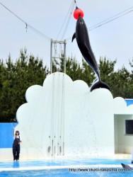 マリンピア日本海・イルカショー