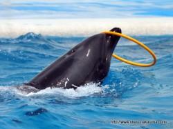 イルカの口でフラフープ