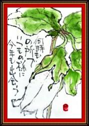 7月の絵手紙2-1