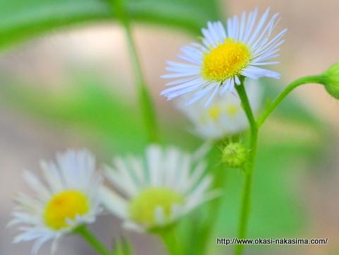 小滝川ヒスイ峡の花