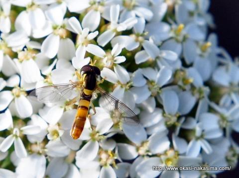 白い花と虫