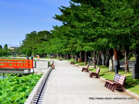 高田公園の池の周縁
