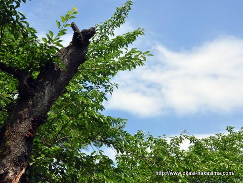 高田公園の青空