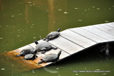 大勧進の池の亀