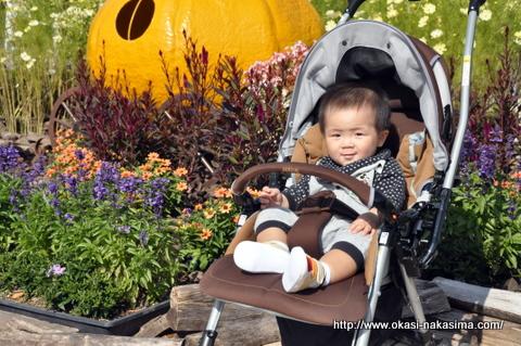 大きなかぼちゃと息子