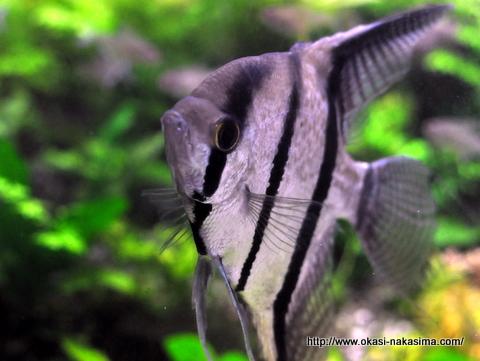 上越水族博物館の魚