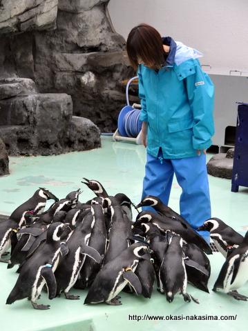 ペンギンの餌付け