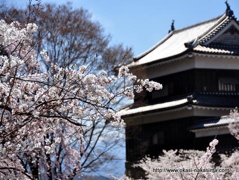 上田城・南櫓と桜