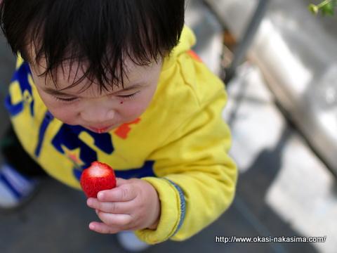 イチゴをほおばる息子