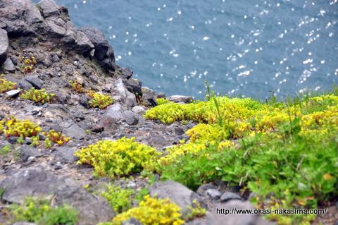 岩場に住む植物