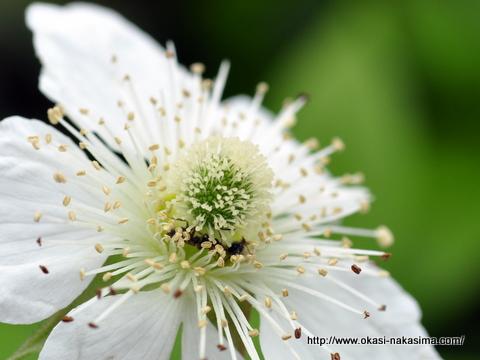 月華山かねこつつじ園に咲いていた花