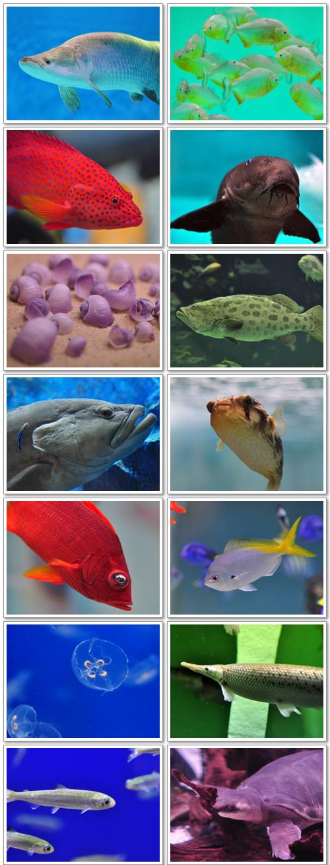 上越市立水族博物館の魚