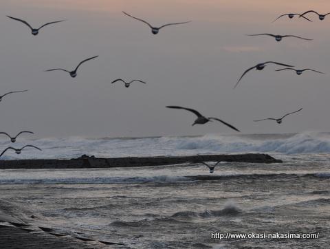 海に逃げる海鳥