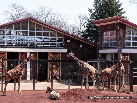 のんびりとした動物園