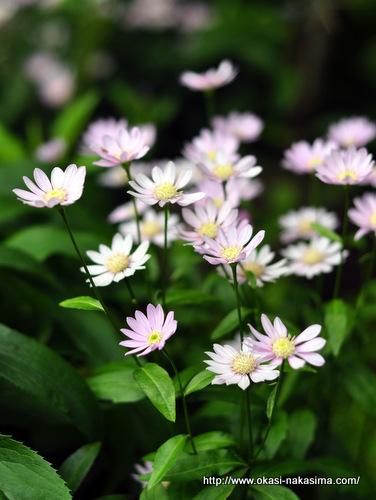 糸魚川店花壇の花