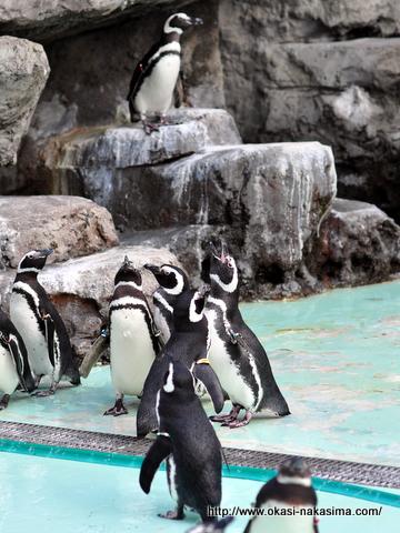 ペンギンの群れ