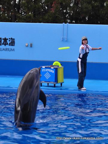イルカのキャッチ