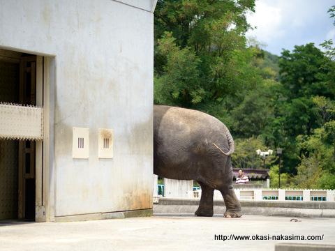 象のおしり